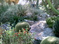Barell Cacti and other desert plants