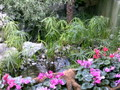 Mediterranean Conservatory photo 2